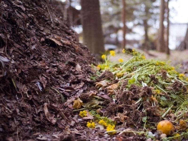 Cosa è il compostaggio e come avviene il compostaggio?