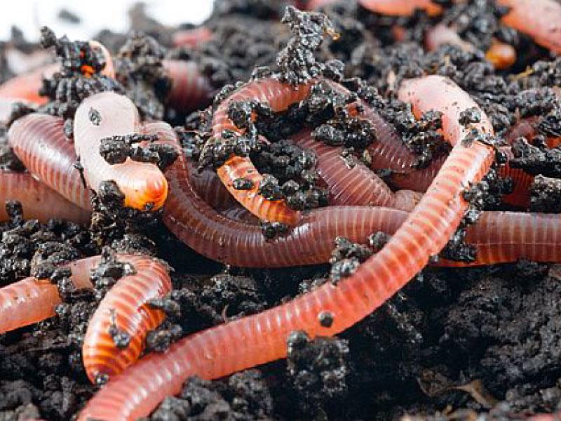 Problemi e soluzioni sul compostaggio. Scopri il compostaggio